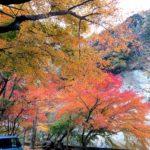 秋のキャンプがおすすめな理由|秋の夜長は「焚き火」を楽しもう。