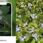 【おすすめのアプリ】|花の名前を調べるアプリ「ハナノナ」がめっちゃ楽しい!